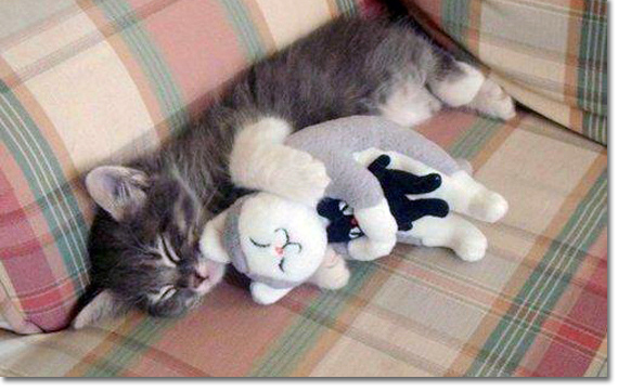 cats-cute-snuggle-Favim.com-217652